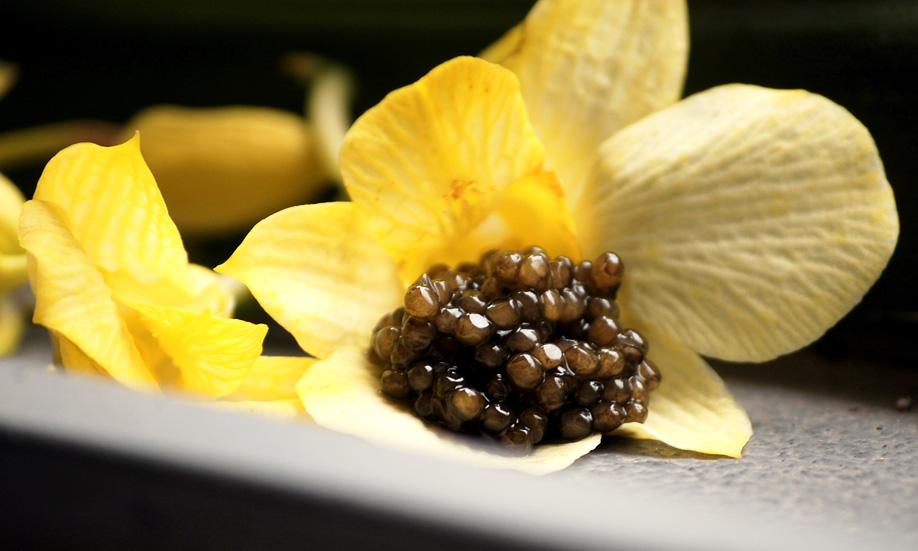 Trứng cá Baeri Caviar