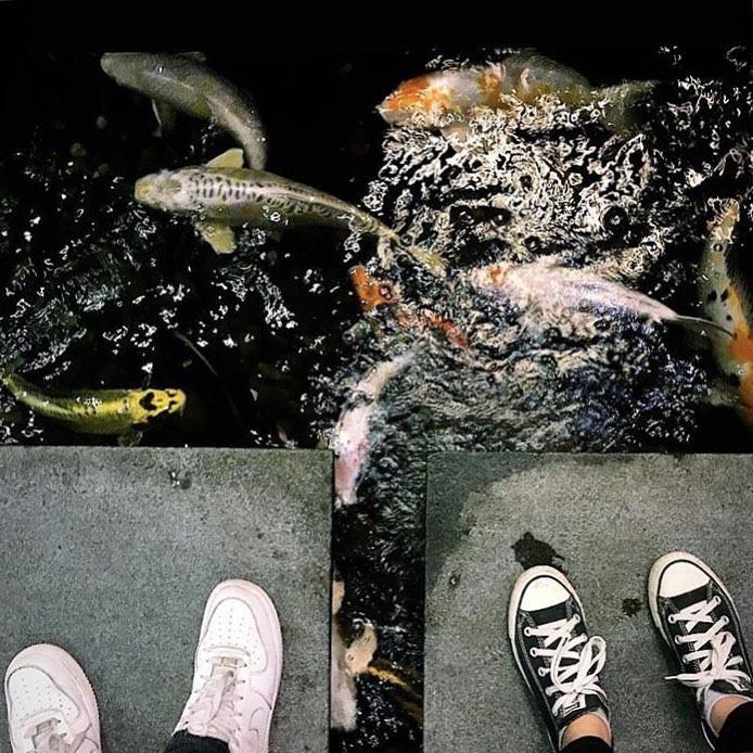 đàn cá koi