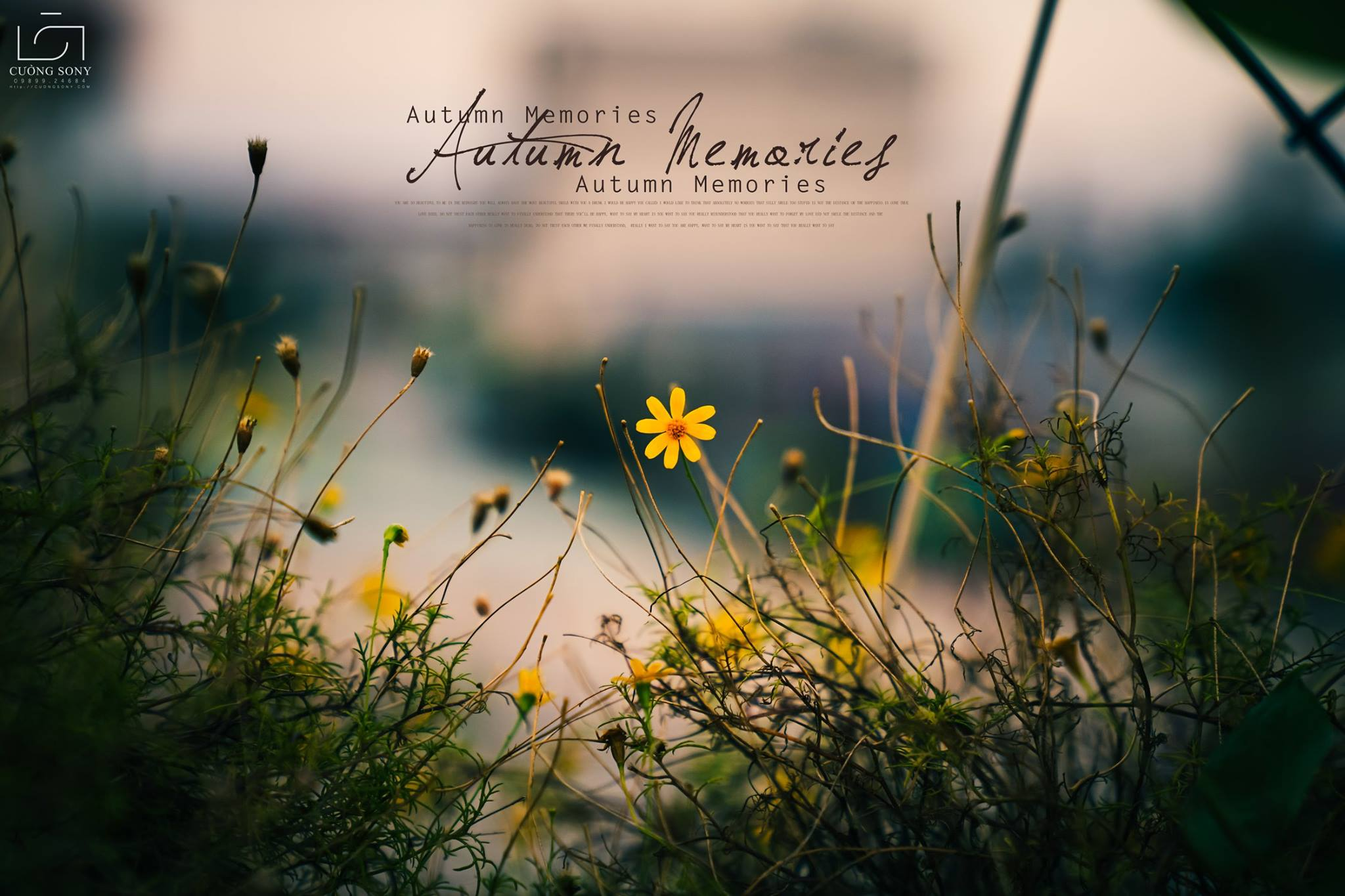 Đám hoa dại trở nên dịu dàng và nên thơ