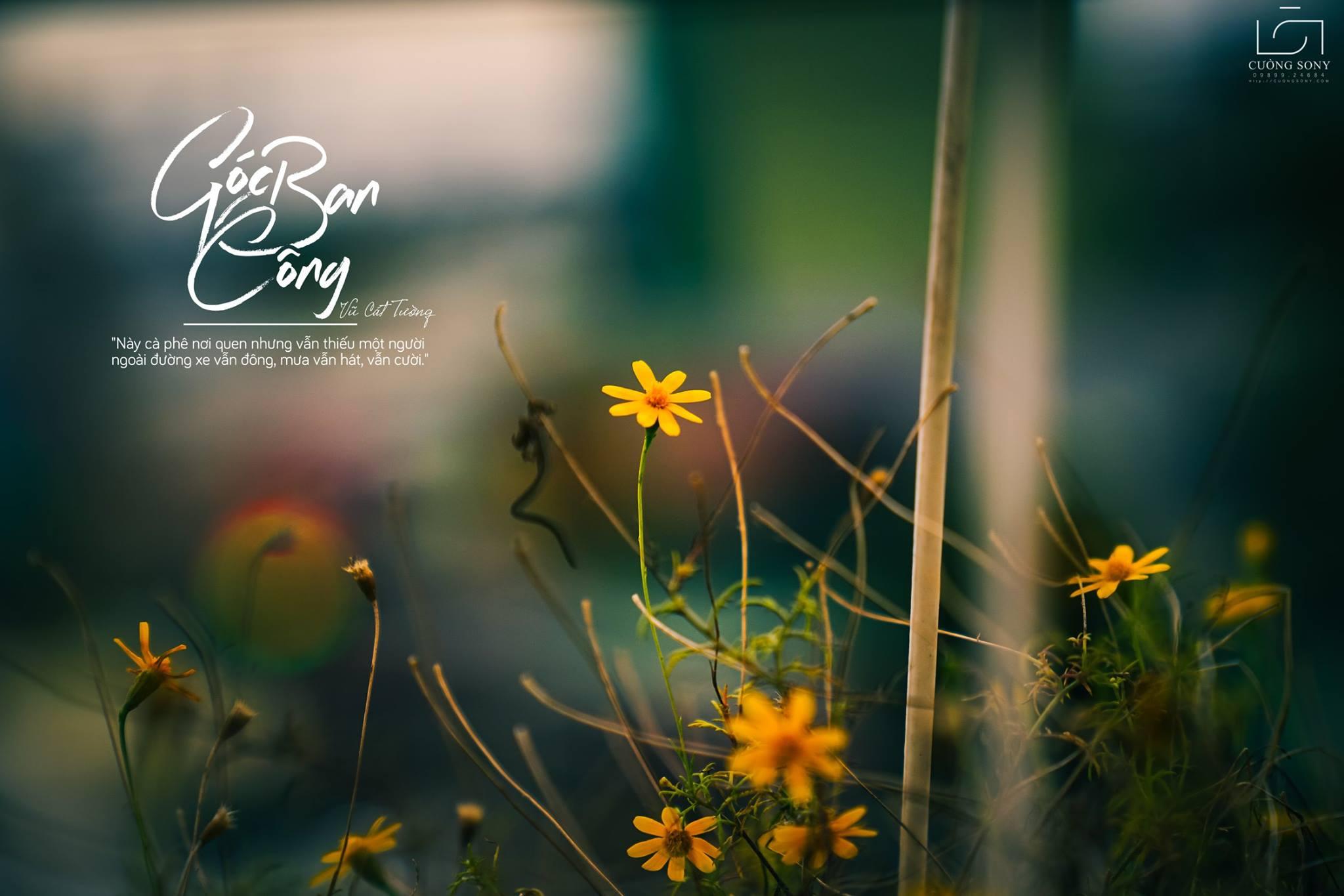 Loài hoa của mùa thu