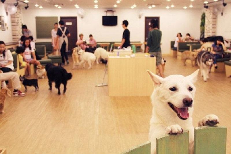 Đây chính là ngôi nhà đáng yêu của những chú cún dễ thương