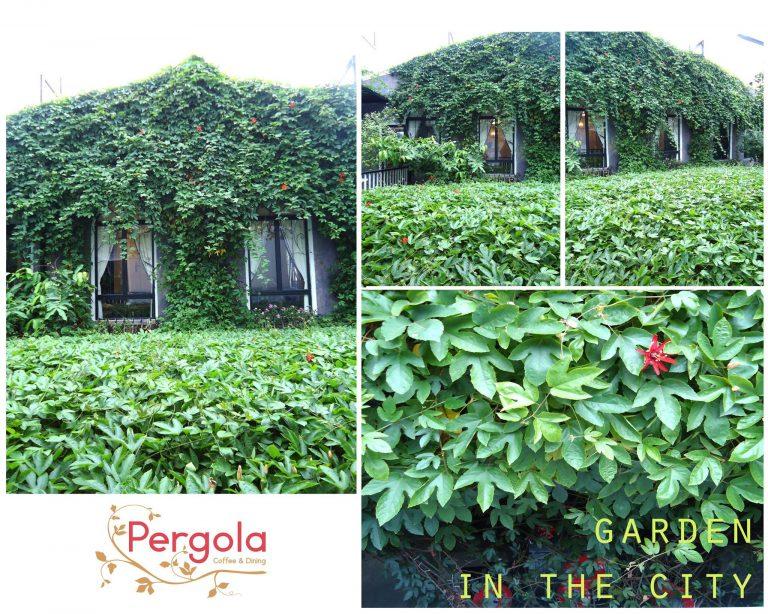 Pergola – Cafe sân vườn đẹp