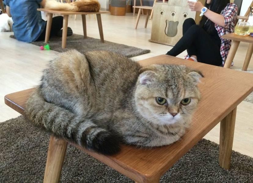 Ngoài những chú mèo xinh xắn thì còn có những chú cún nha