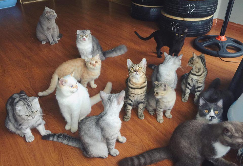 Kuro cat Coffee - Cà phê dành cho hội cuồng mèo tại 253/4 Bùi Đình Túy, P. 24, Q Bình Thạnh